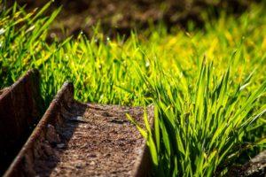grass-1025025_960_720